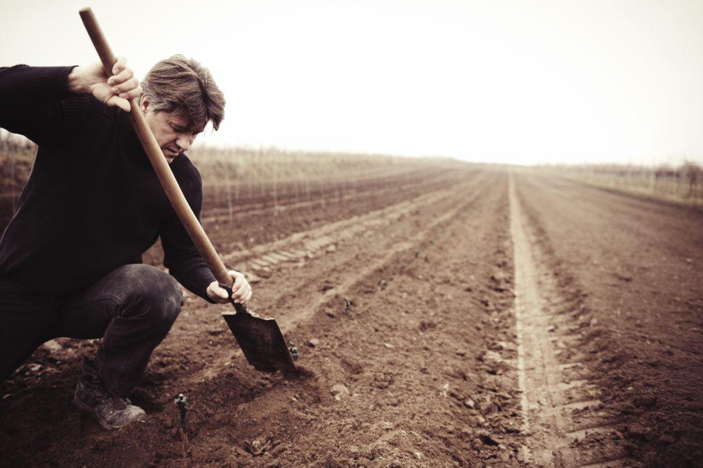 Aanplant van een nieuwe wijngaard
