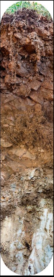 een bodemprofiel